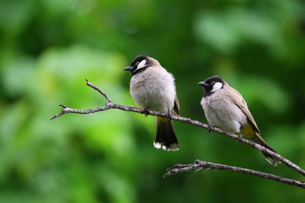 Two birds sitting on a branch.